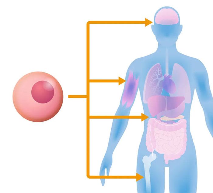 幹細胞治療とは