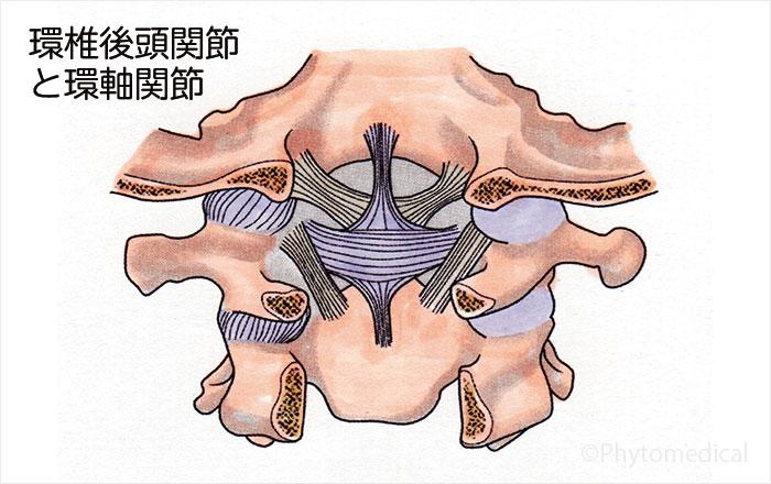 環椎後頭関節と環軸関節